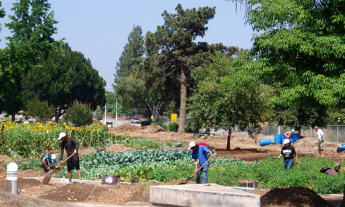 John Muir High School garden (renamed Muir Ranch). The garden morphed into a CSA - a project that supplies food to the community, in exchange for the money to help keep it going.