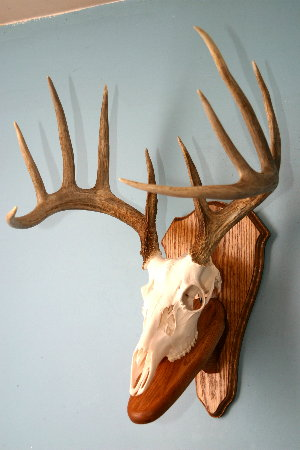 Great looking wall mount that has plaque with pedestal.