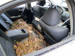 This is what cars look like inside after Hurricane Sandy came through NYC
