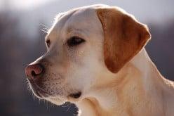 Top 10 Medium Dog Breeds
