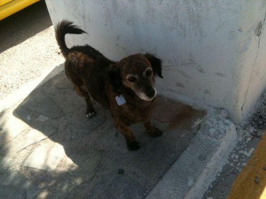 The Welcome Dog Of Patmos - click on the link for another story