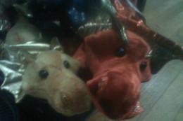 Two hopeful baby dragons awaiting adoption