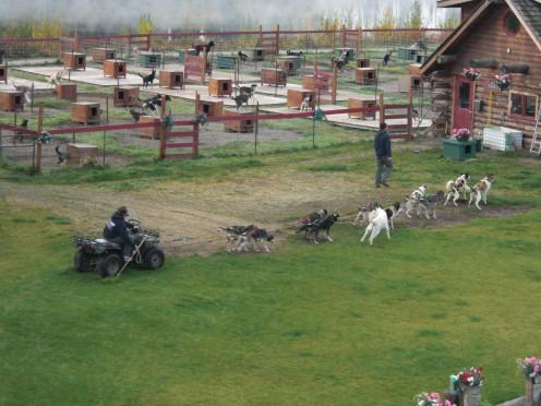 Susan Butcher training kennels, Fairbanks, Alaska