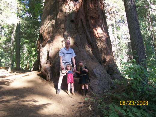 The first Sequoia tree we saw.