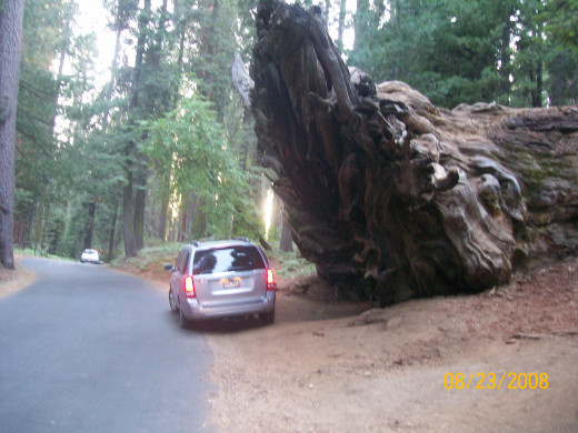 My mini van next to the roots of a Giant Sequoia that had fallen over.