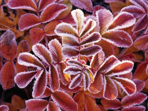 frosty surprises