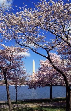 Washington, D.C. Travel