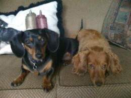 Our Sweet Doxies