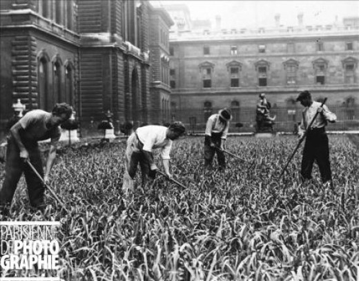 1941/43. A fascinating testimony : the gardens of the palace of the Louvre in Paris planted with leeks in an attempt to counterbalance the lack of produce. Copyright LAPI/Roger-Viollet