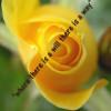 tandaa profile image