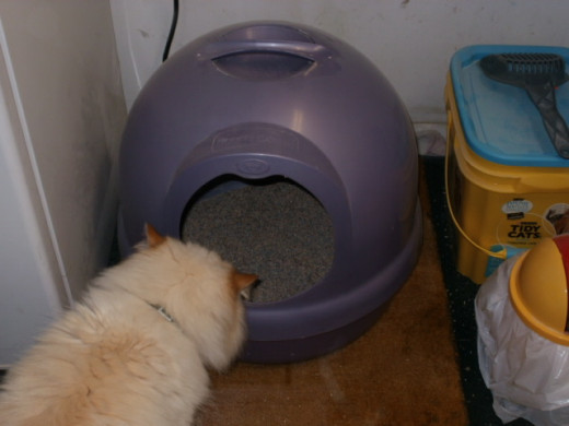 Three share one domed potty box.  Axel was curious about my picture taking.  He never did pee!