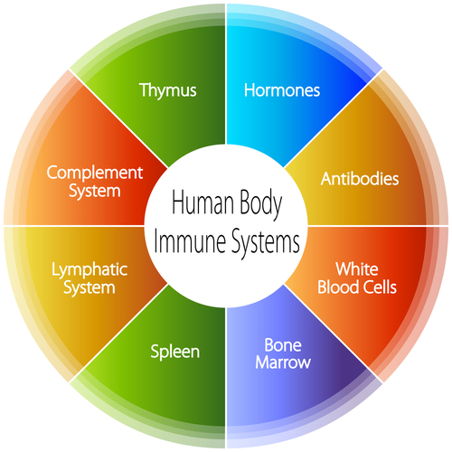 The organs of the immune system are located throughout the body.
