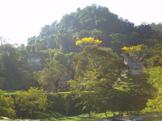 Looking up at the Templo de la Cruz and Templo del Sol from the Palacio.