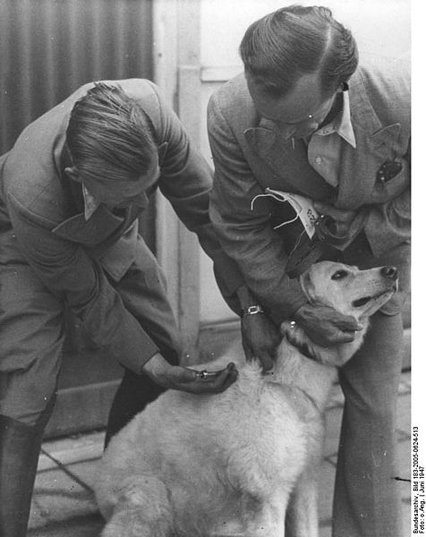 Dog being vaccinated to prevent canine distemper