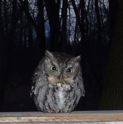 Owl: A Harbinger of Evil and Death?