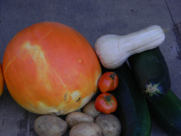 Here is an example of the results I received with the Ruth Stout gardening method.  The best crop I've ever had.
