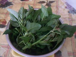 Kalunay (amaranth) freshly picked from our container garden this year (2012.)