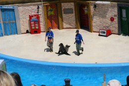 The Clyde and Seamore show is hilarious and features sea lions (and an otter).