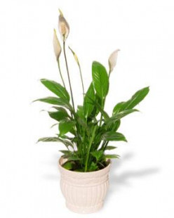Perk Up The Indoors With Potted Plants And Refresh Indoor Air