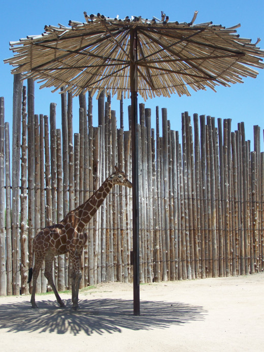 I always enjoyed the giraffe enclosure. There's something about the lines and light!