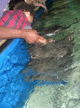 Petting the Sting Rays