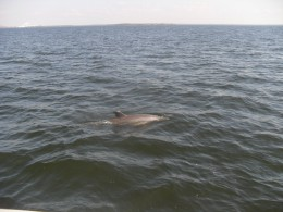 Dolphins from the view of the boat