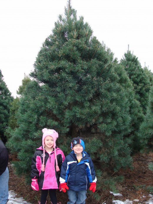 We found our tree!