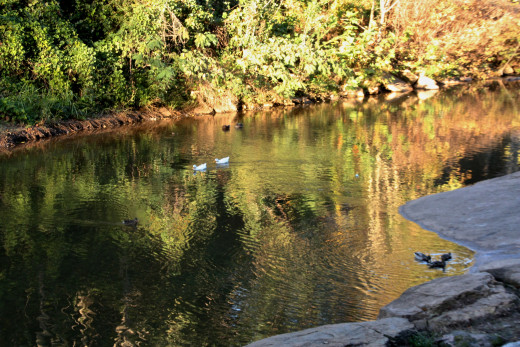 Part of Falls Park along the Reedy river.