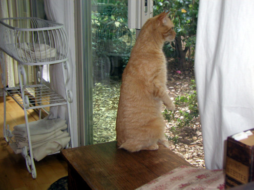 """Something is very curious outside these windows!"""