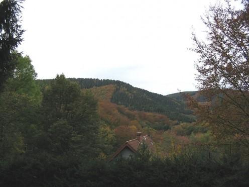 Hurtgen Forest terrain.