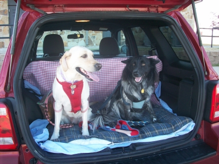 Maya & Pierson ride very comfortably in the back of the SUV. They can still wear their dog seat belts in the cargo area.