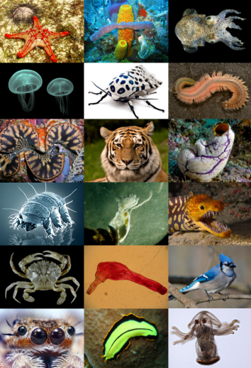 Animal diversity - but where is the human?