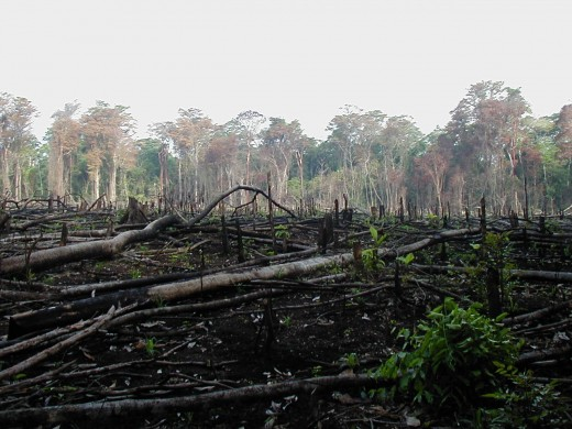 Jungle burned for farming in Southern Mexico. Modern deforestation is much faster than it was in ancient times.