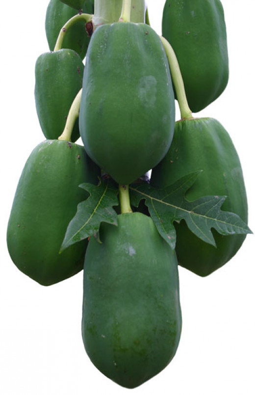 Papayas can not only help your digestive system but they protect your heart as well.