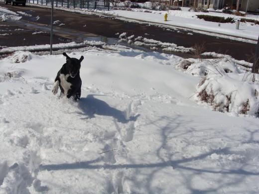 Jack running through the snow