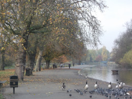 The Central Lake, Regents Park London