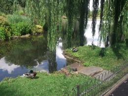 The Queen Mary's Garden, Regents Park, London