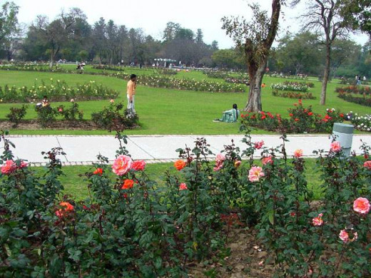 Zakir Hussain Rose Garden, is a botanical garden located in sector 16 pread over 30 acres with 50,000 rose-bushes of 1600 different species.