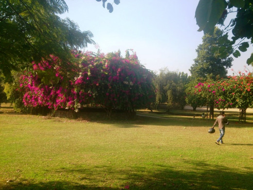 Bougainvillea garden situated in sector 3 exhibits more than fifty attractive varieties of bougainvillea plants.Apart from these paper beauties, the park also holds fitness tracks, which provides a good walk and morning exercise field amidst a colour