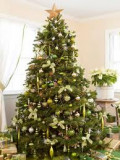 What's Wrong with Having Christmas Trees in the Home?