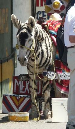 Fake Zebras