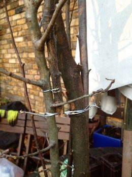 Secure the twigs together with garden twine
