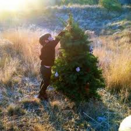 Paul found the right tree