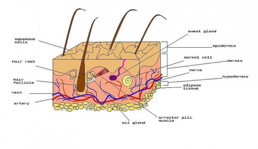 The bacteria that can cause skin infections normally live on our skin or other areas of the body and do no harm.