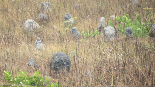 Ant hills form in all sorts of sizes and shapes and colour. Here are grey ones forming in an area that is usually water logged in wet season.