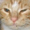 ractelbeast profile image