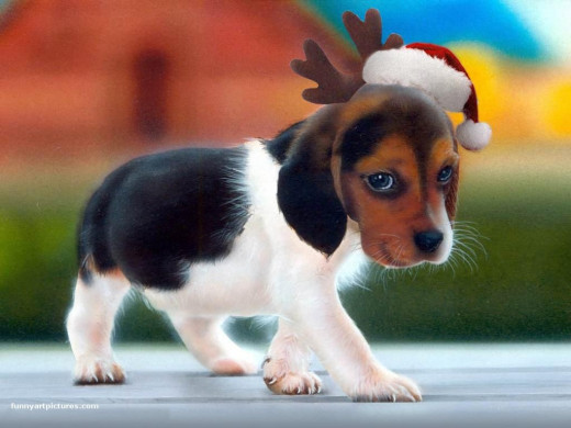 dog christmas wallpapers