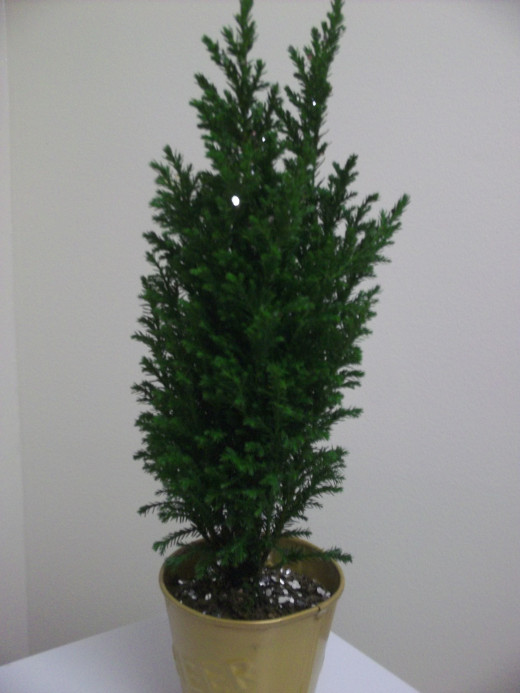 I am hoping me and this mini-tree have a long, happy life together.