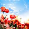Spring Poetry & Spring Birthdays