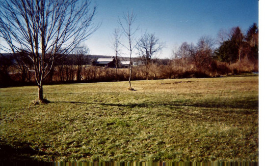 A view of the extensive hedgerow that ends at the swamp at the back of the property.